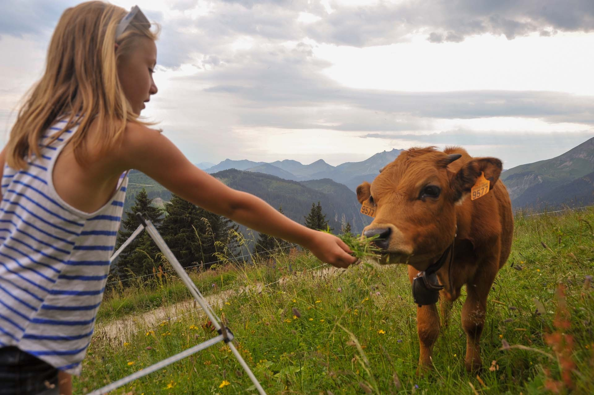 Op de boerderij, in de alpenweiden