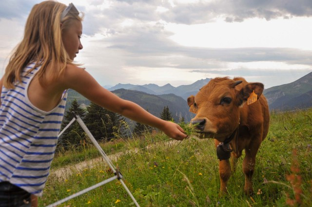 On the farm, in the alpine pastures