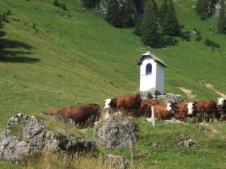 ferme-de-barbossine-1-1243